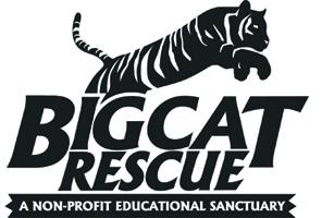 Internship at Big Cat Rescue