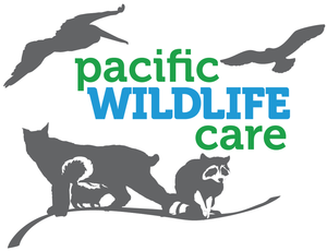 Internship at Pacific Wildlife Care