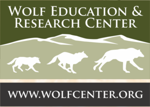 Internship at Wolf Education and Research Center